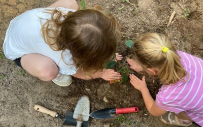 Planning for a Better Future at Treetops